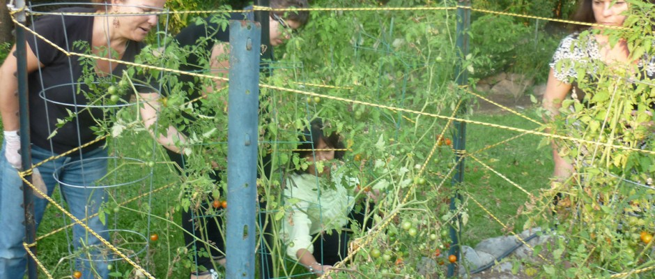 Harvesting vegetables for Farm-to-Table Class