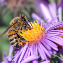 Image for Take Action: Ban Neonicotinoid Pesticides Before They Devastate Bee Populations, Get Antibiotics Out of Organic Apples & Pears, How to Green Your Spring Cleaning