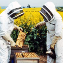 Image for In the News: Victory for Mexico Beekeepers as Monsanto Loses GM Permit, USDA Releases Final Rule to Privatize Poultry Inspection, Vermont Law School Becomes First BEE Protective Campus