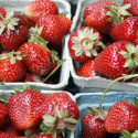 "Image for In The News: The Future Of Food Is On The Table; Your ""Organic"" Strawberries Aren't Really Organic; Wide Use of Antibiotics Allows C. Diff to Flourish; Scientists Warn to Expect More Weather Extremes"