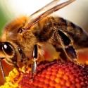 Image for Take Action: Endorse Two Critically Important Summer Nutrition Bills; The Decades of Deception Must Stop; Tell Bayer: Stop Selling Bee-Killing Pesticides