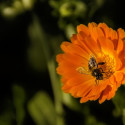 Image for Take Action: Ask Kellogg's, PepsiCo, Coca-Cola and General Mills to Support Mandatory FDA labeling of GMOs; Tell Ace Hardware and True Value to Stop Selling Bee-Killing Pesticides; Help Stop Massive Food Waste In The US