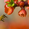 Image for In The News: Boston Grocery Store is Fighting Food Waste; Pollinator Populations Greatly Affect Our Food Supply; An Elementary School Leads the Way in Net-Zero Learning