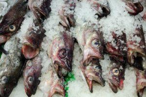 fish-1850166_1280