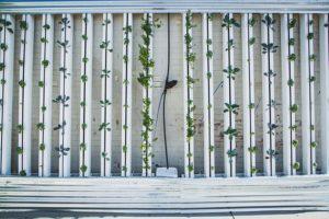hydroponics-917285__340